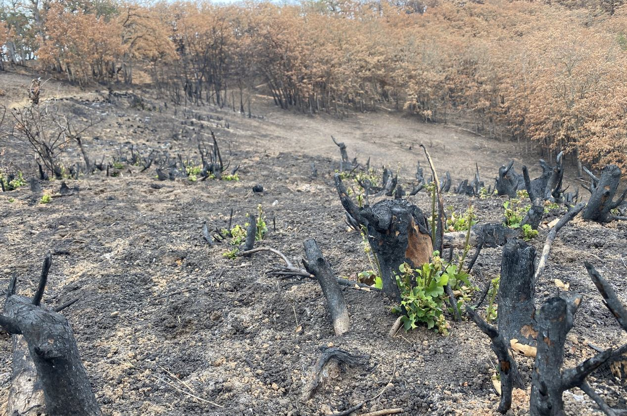 Early Fires in 2021 Forecast Daunting Future
