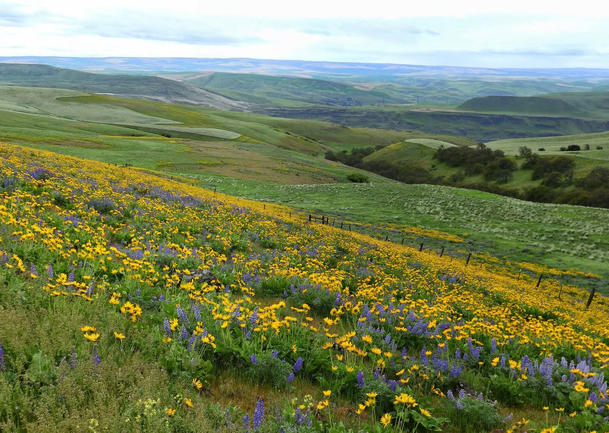 GO EAST: Columbia Hills State Park