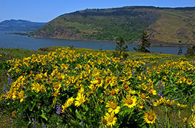Hike Mosier Plateau
