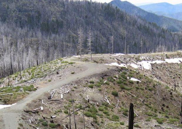 Working to Stop the Walden Clearcut Bill