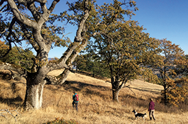 Preserve the Wonder Hike at Coyote Meadow