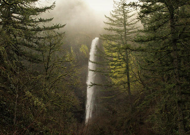 Plants, Geology and History Hike at Latourell Falls, OR