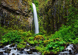 Photography Enthusiast Hike to Dry Creek Falls, OR