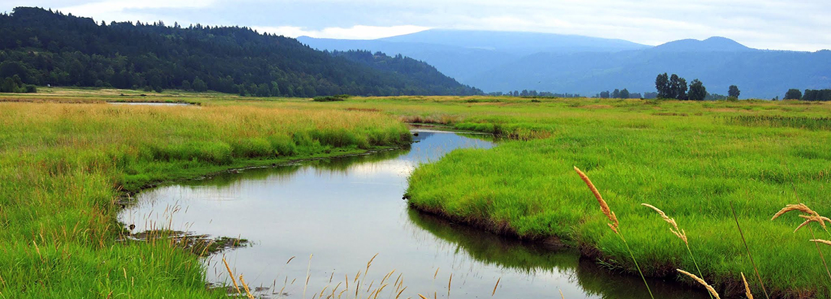 Steigerwald Lake National Wildlife Refuge - Gibbons Creek