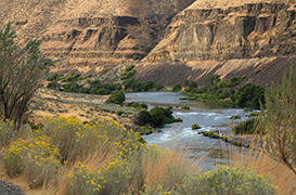 Riparian Ecology along the Deschutes River Trail, OR