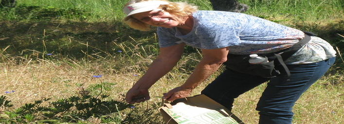 Lend-a-Hand Stewardship: Native Seed Collection