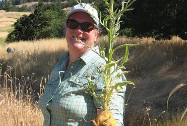 Lend-a-Hand Stewardship: Yellow Starthistle