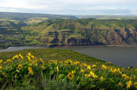 Rowena Plateau Botanical Walk, OR