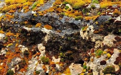 Lichen Discovery Hike - Location TBD