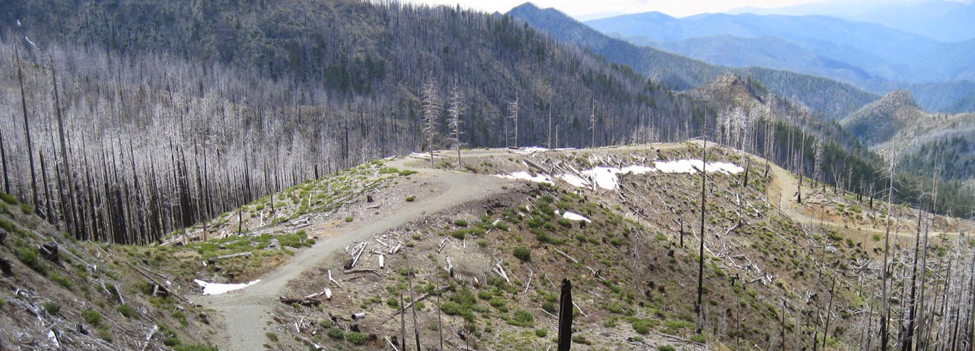 Why Post-Fire Logging Is Wrong for the Gorge