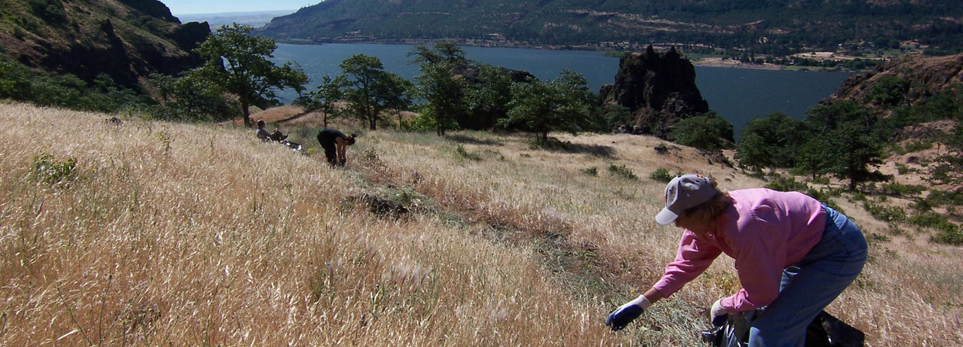 Volunteer with Friends of the Columbia Gorge