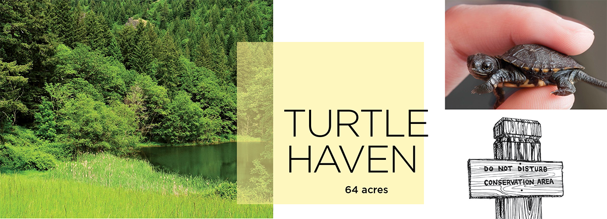 Turtle Haven