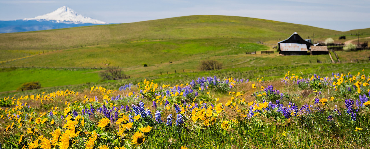 Columbia Hills State Park - Dalles Mountain Ranch to Stacker Butte