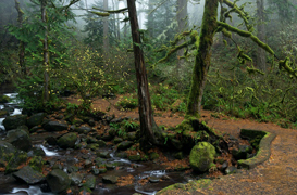 Multnomah Falls - Franklin Ridge Loop