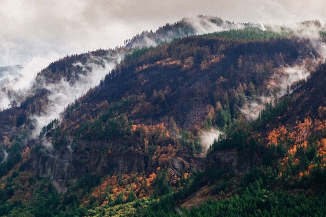 Friends Responds to Eagle Creek Fire Court Decision
