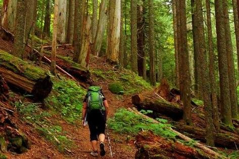 Pacific Crest Trail, Benson State Park Reopen After Eagle Creek Fire