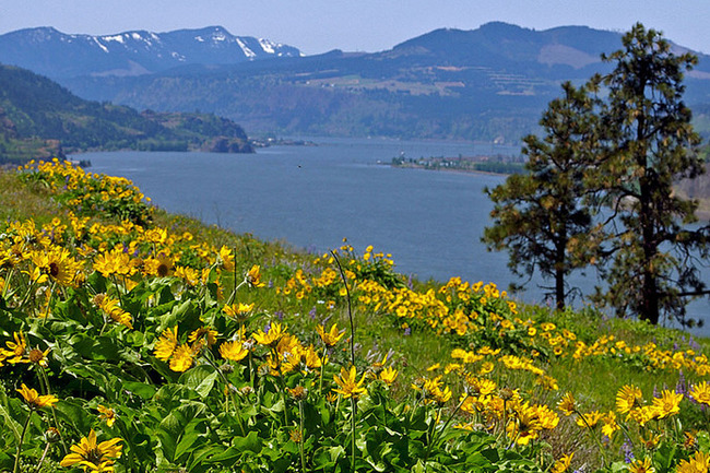 Connecting With the Gorge: The Mosier Plateau Trail