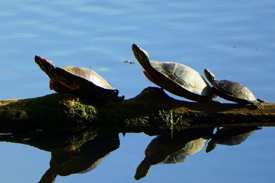 On World Turtle Day, New Conservation Property Enhances Habitat