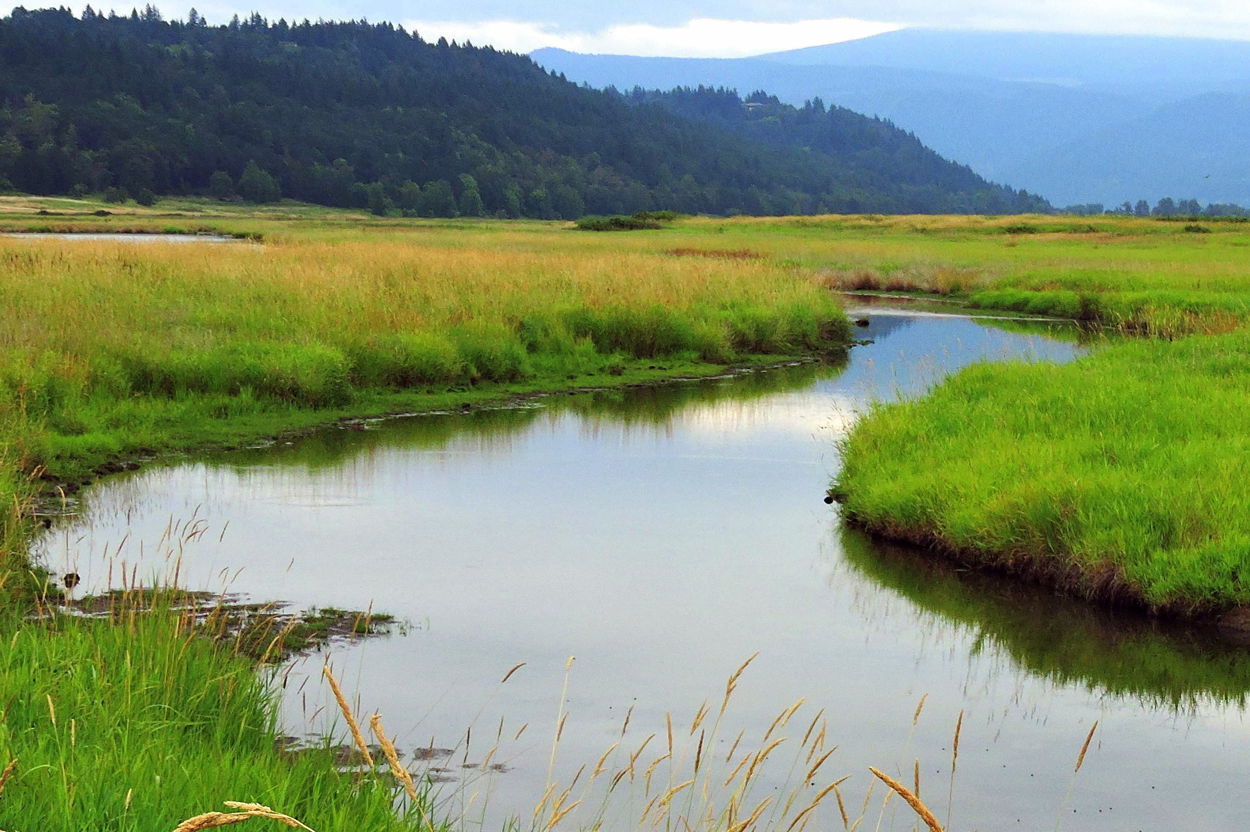 Conservation Group Permanently Protects 470 Acres of Land in Columbia Gorge