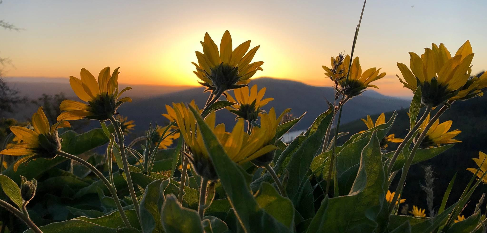Wildflowers at sunrise, Tom McCall Point: Neil Cadsawan