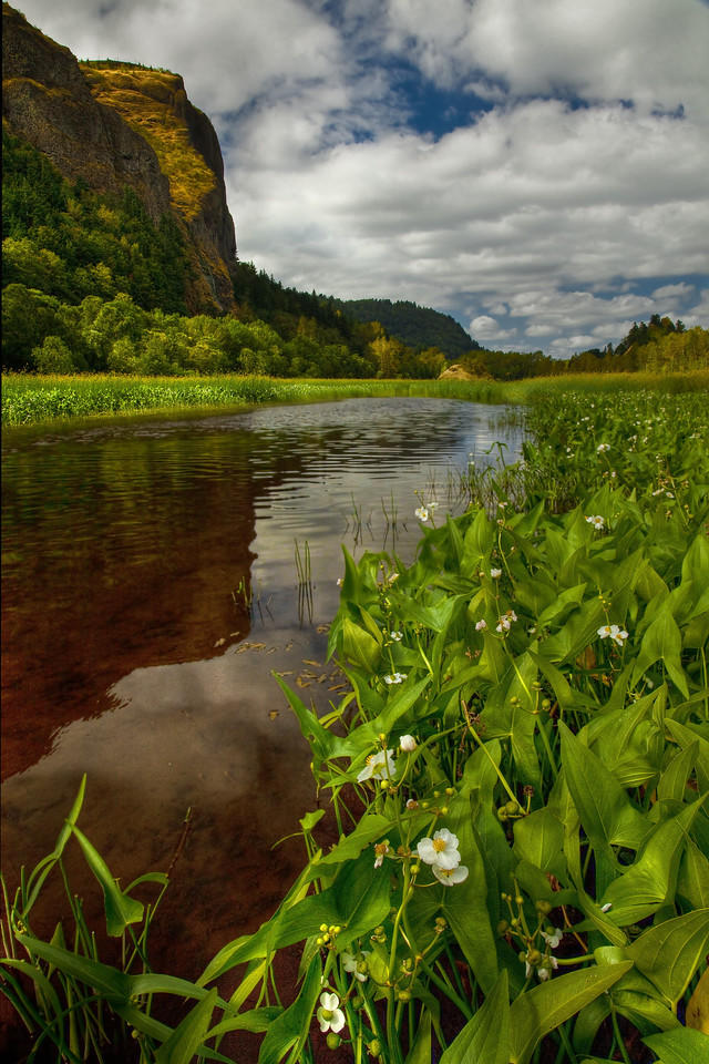 (Hon. Mention) Scenic Western Gorge- Daniel Rappaport: Wapato, Mirror Pond