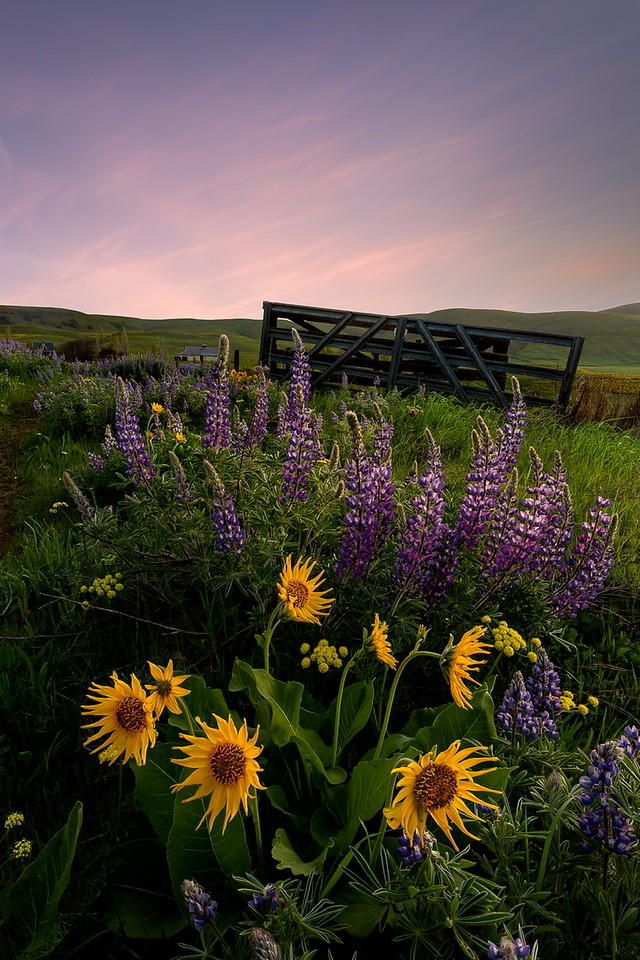 Gateway to Spring, Columbia Hills State Park: Matthew Smith