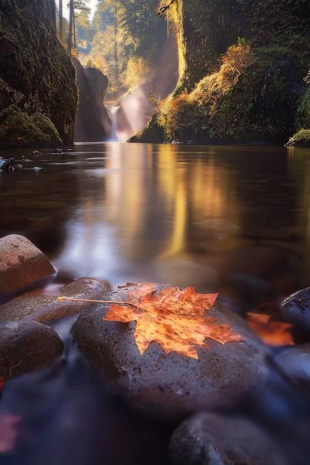 Punch Bowl Falls, Bigleaf Maple Leaf along the water: Tula Top