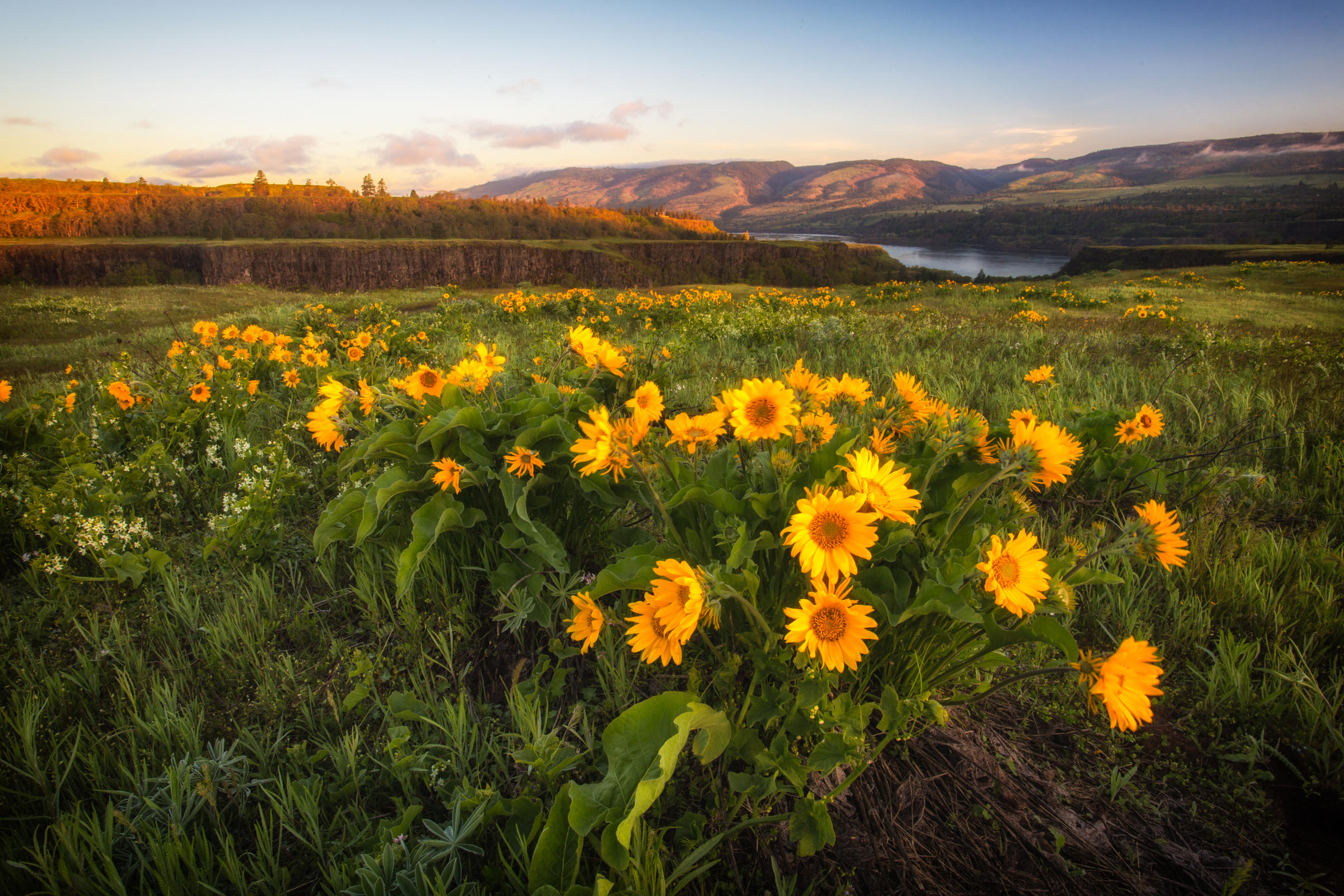 Photo Contest Wildflowers Category Winner